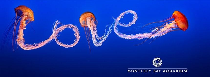 Juan Botero | Monterey Bay Aquarium